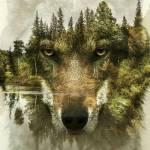 wolfheart.69
